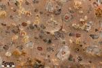 Der Granitporphyr von Thal-Heiligenstein (undeformiert)