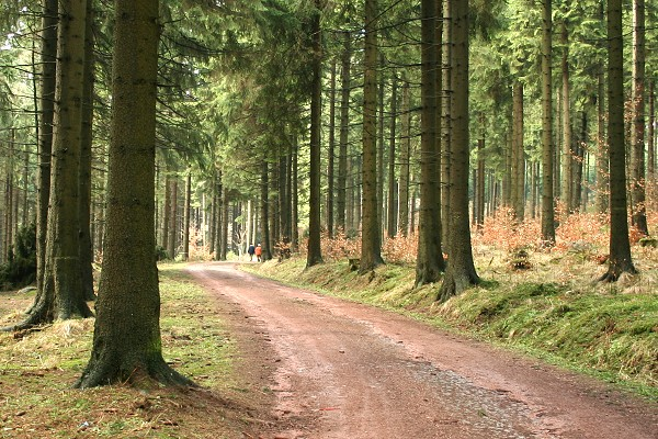 Der Rennsteig - Wanderweg im Thüringer Wald