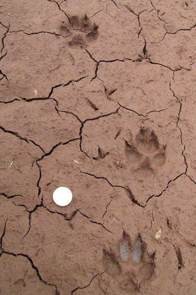 Hundefährte im Schlamm mit Trockenrissen