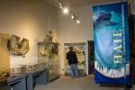 """Sonderausstellung """"HAIE – Faszination seit Jahrmillionen"""" im Naturhistorischen Museum Schloss Bertholdsburg in Schleusingen"""