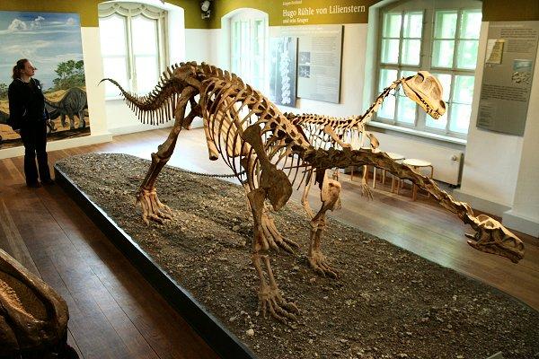 Saurier-Nachbildungen der Keuperzeit im Naturhistorischen Museum Schleusingen