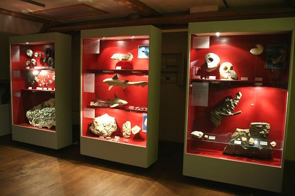 """Triasausstellung """"Thüringen vor 230 Millionen Jahren"""" in der Kulturscheune in Mühlberg"""